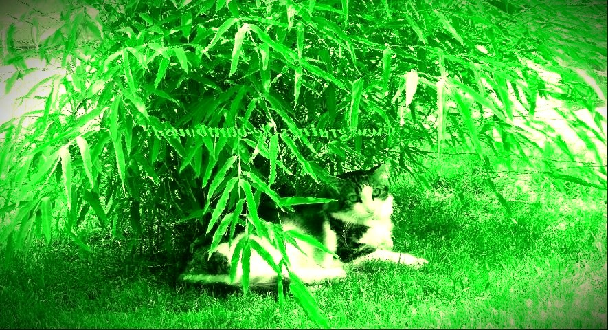 bambous-envahissants.jpg