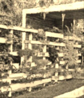 Côté jardin : un grand espace de verdure aménagé